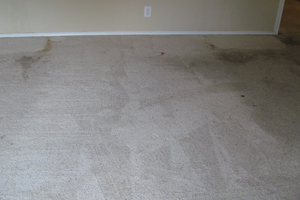 Heaven S Best Carpet Cleaning See The Before After Photos San Antonio Tx